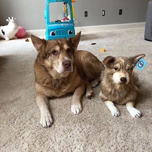 Personalized Husky Stuffed Animal Plush Lookalike