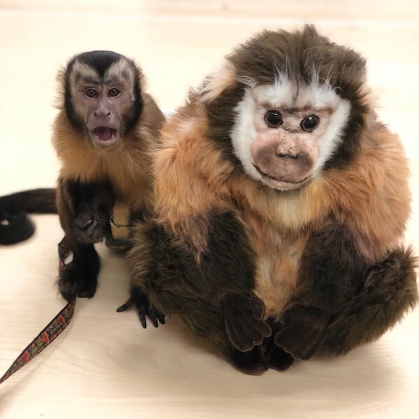Monkey lookalike realistic stuffed animal