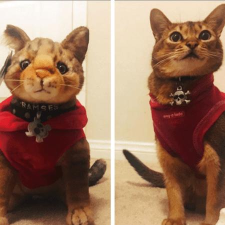 realistic stuffed cat