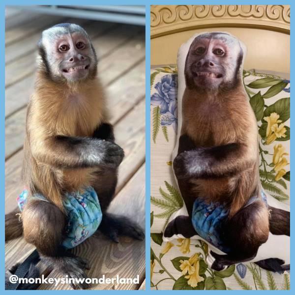 Monkey super soft pet petsies pillow