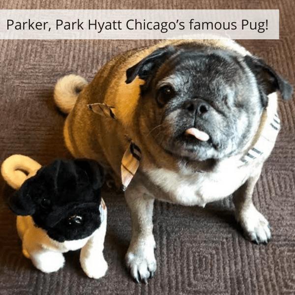 bulk custom plush of pets