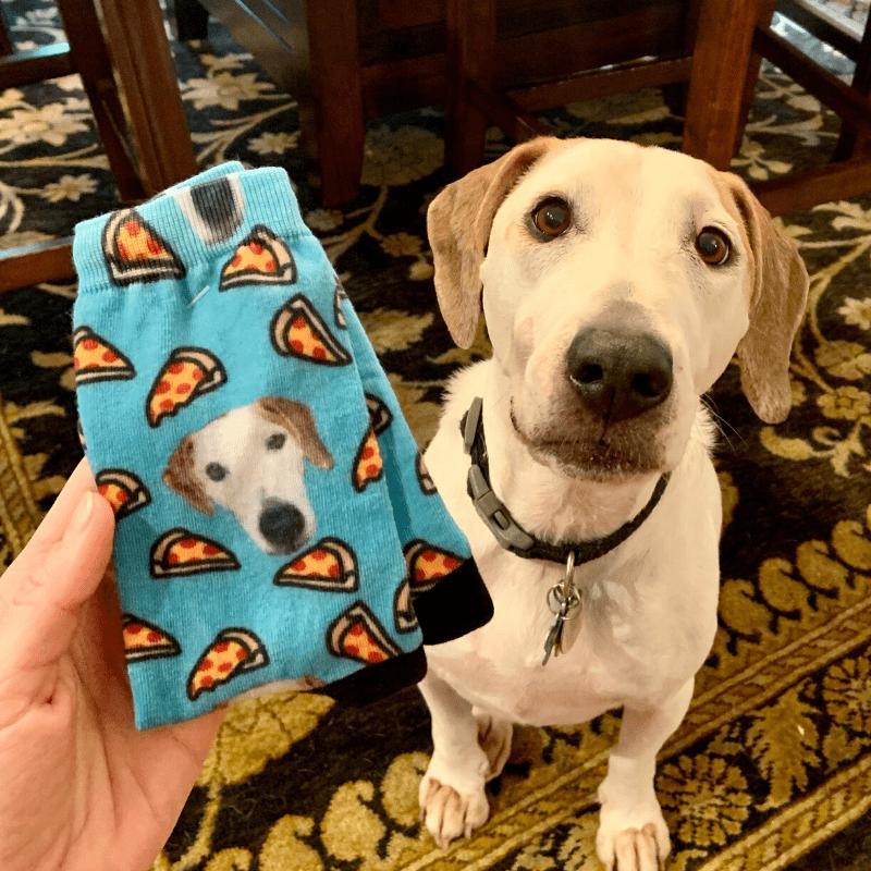 pet socks