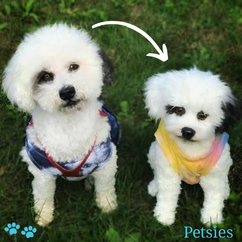 petsies forevers cuddle clones alternatives