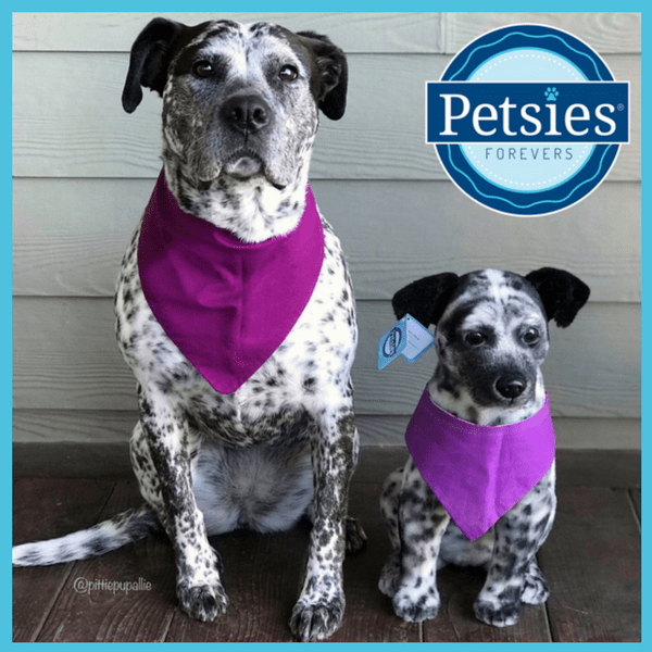 petsies forevers custom plush