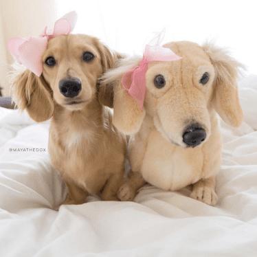 Dog Stuffed Animal Custom Dog Plush Petsies