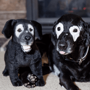 custom lookalike dog stuffed animals by breed