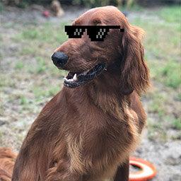 Rusty, plush security