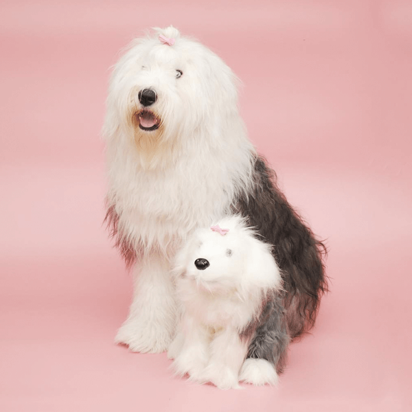 plush based on your pet
