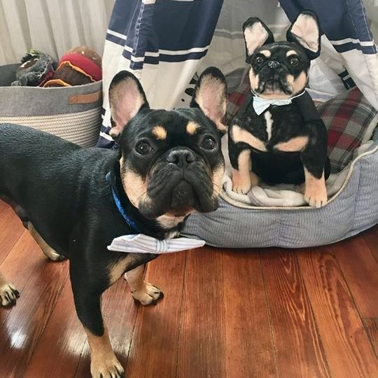 Frenchie stuffed animal