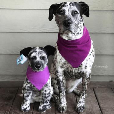 custom dog stuffed animal