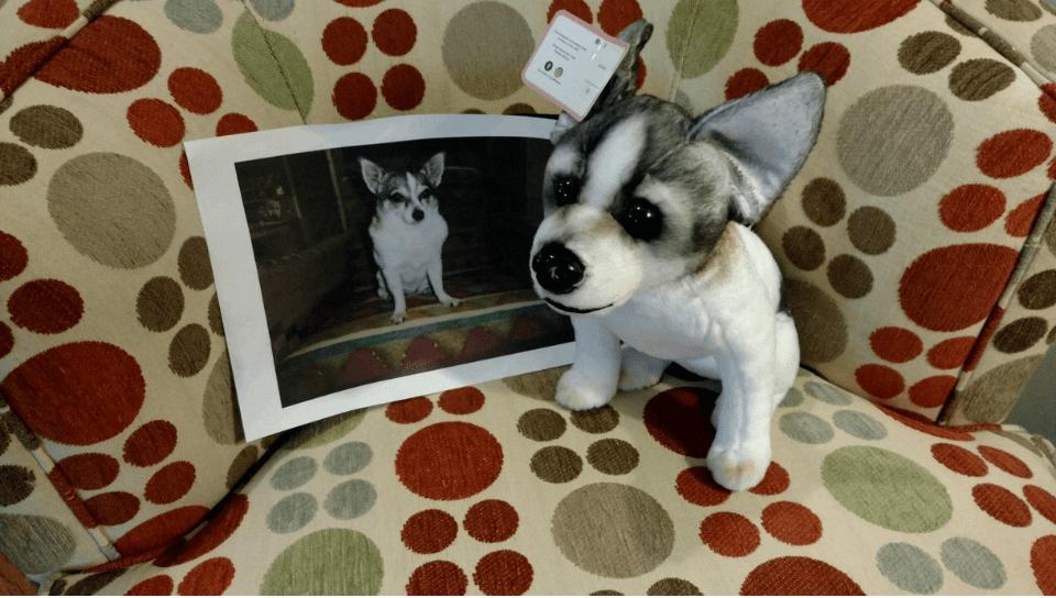 companion stuffed animal