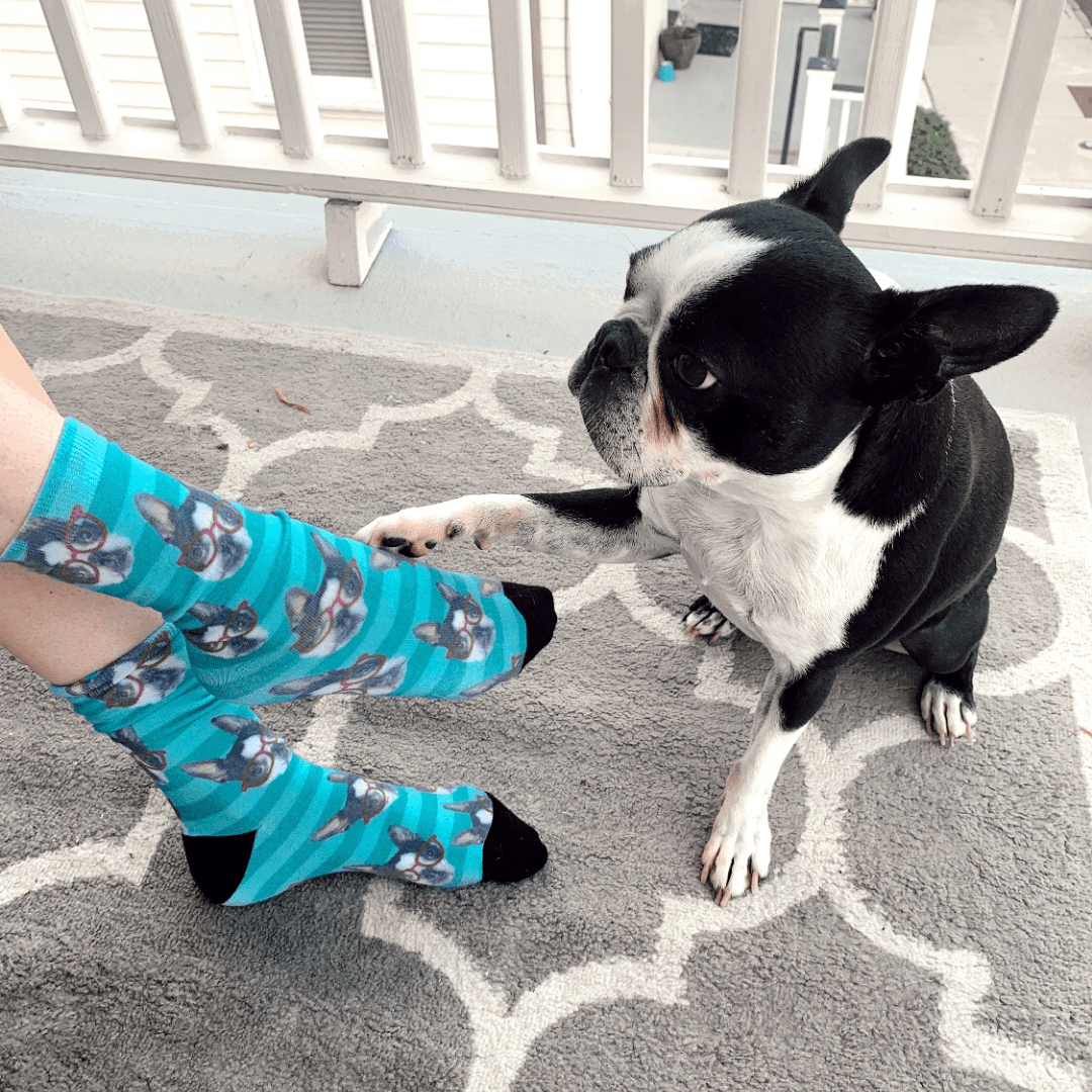 socks of your pet