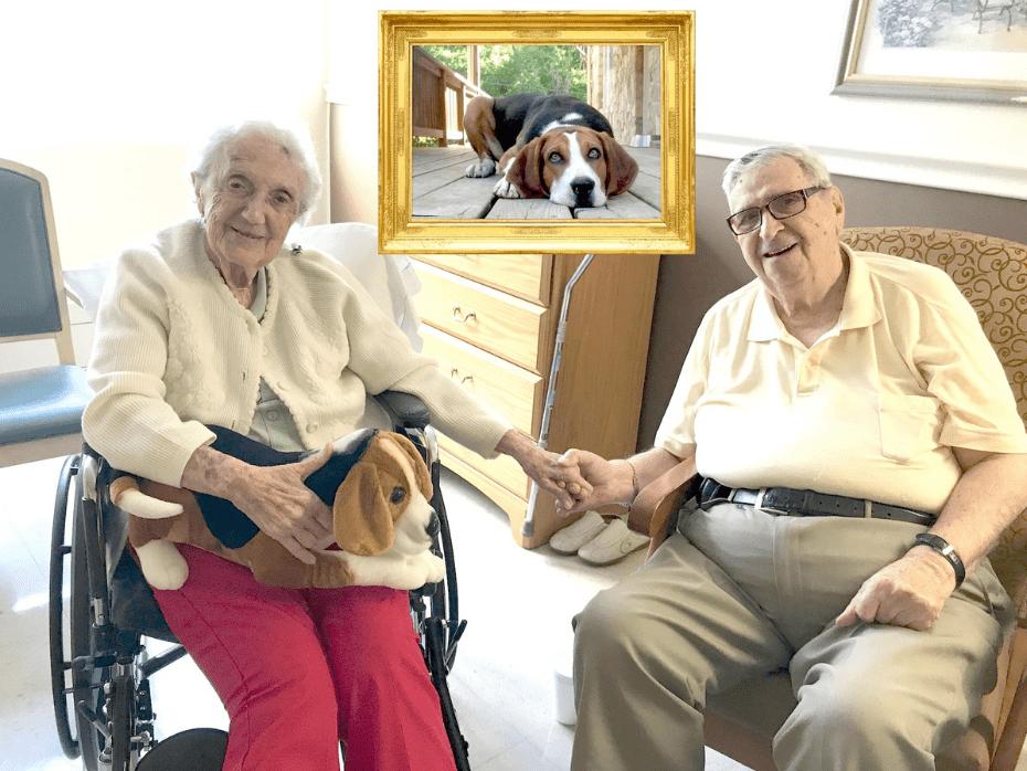 Petsies and the Elderly