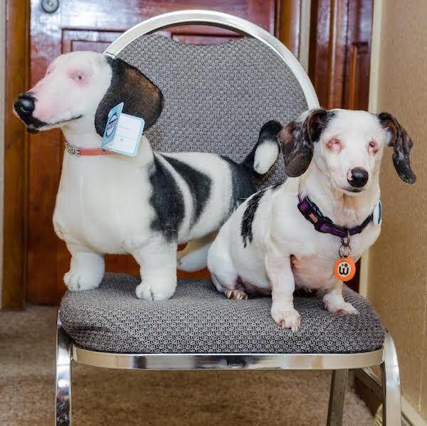 Personalized Dachshund Stuffed Animal Plush Lookalike