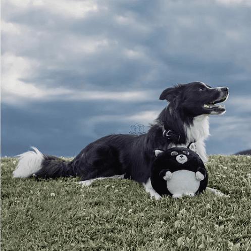 circle plush dog