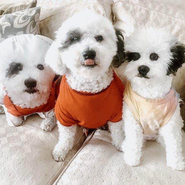 Personalized Pet Animal Plush Pillow 2