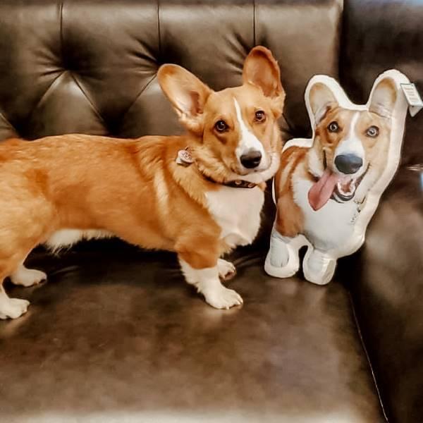 Corgi dog super soft pet petsies pillow